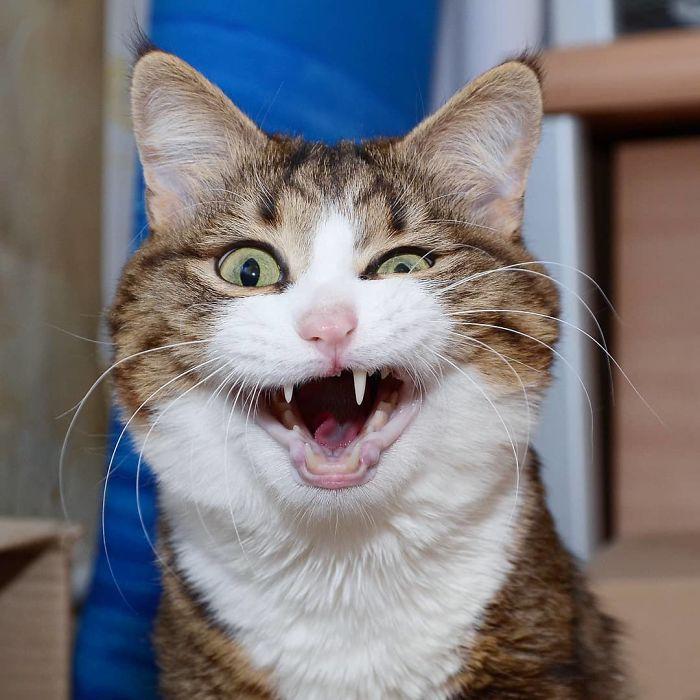 FOTO: Kočka, Která Uchvátila Internet Svými Veselými
